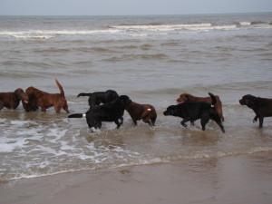21 sept strandwandeling (12)